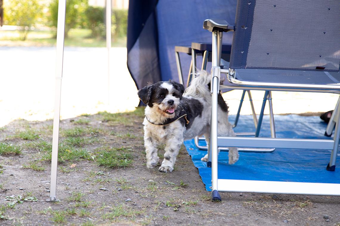 Camping mit Hund in Pirna
